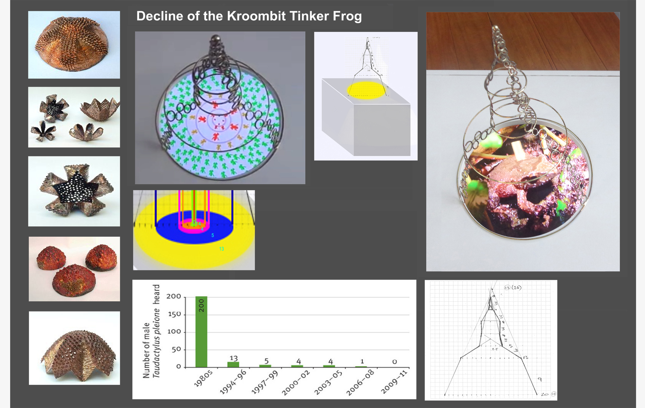 Decline of the Kroombit Tinker Frog