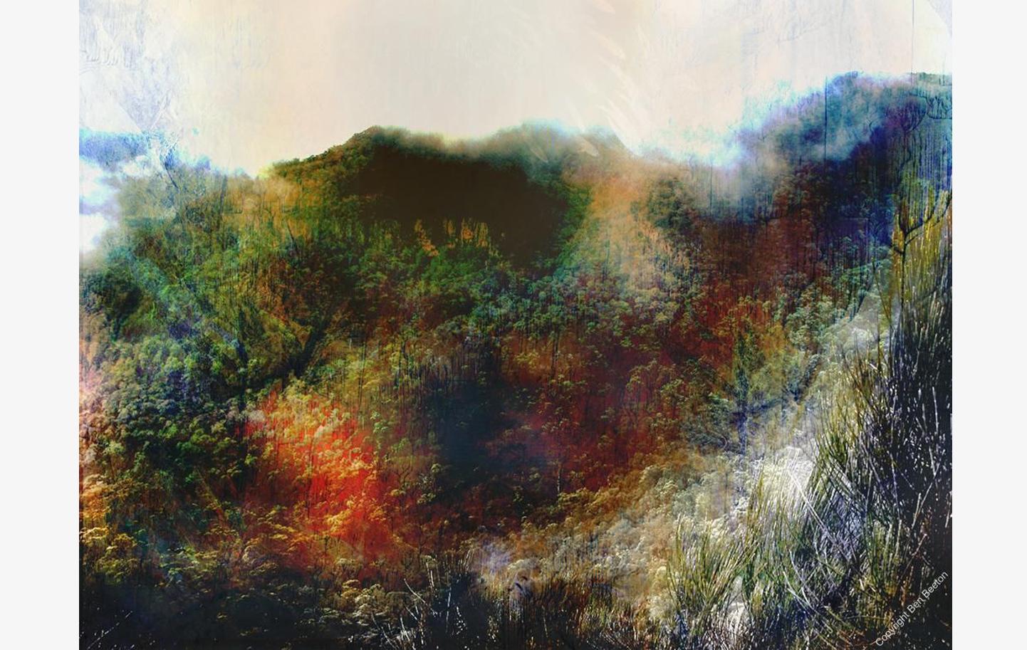 Impressions on the Lyre Bird Track