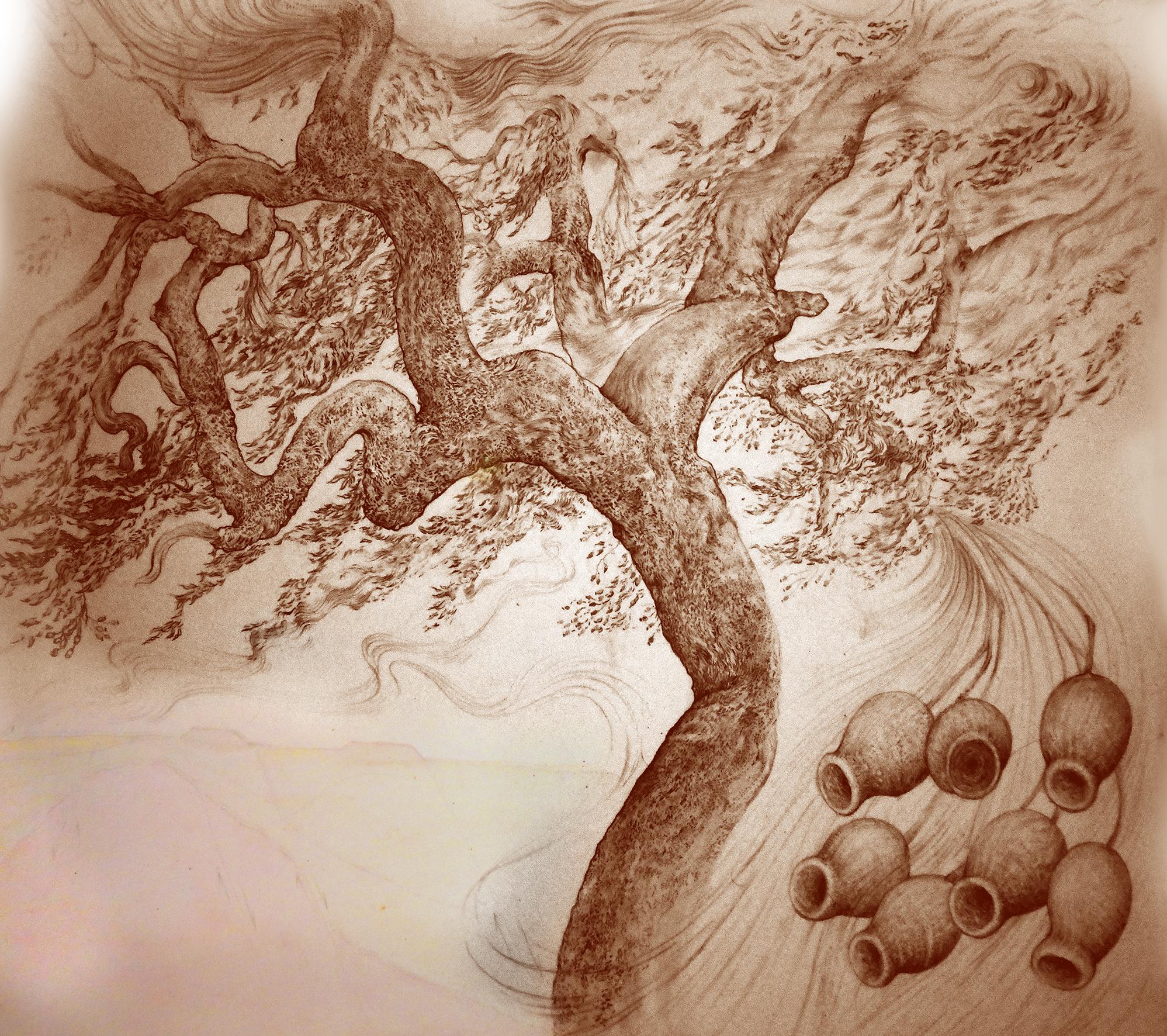 Marrii Tree