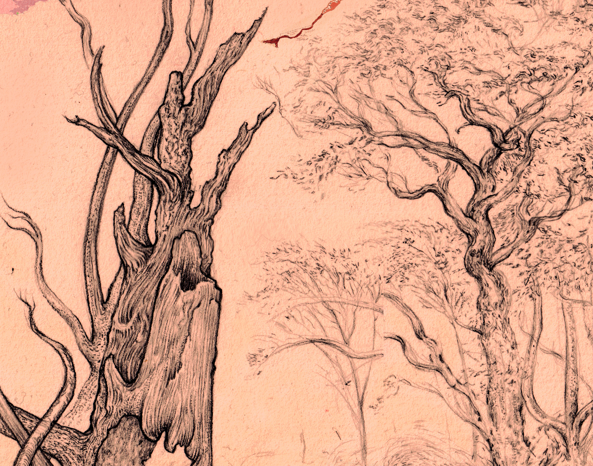 Donnolly Lakes detail 08