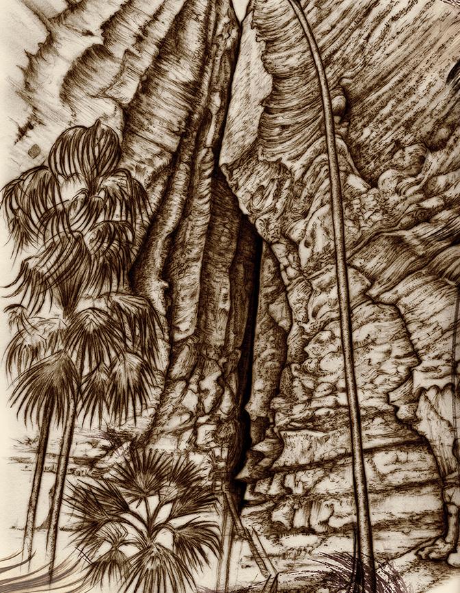 Carnarvon Gorge detail 17