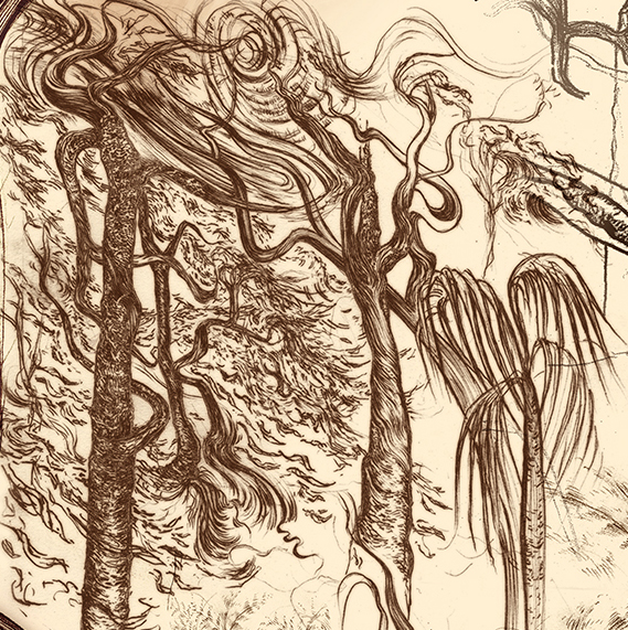 Carnarvon Gorge detail 20